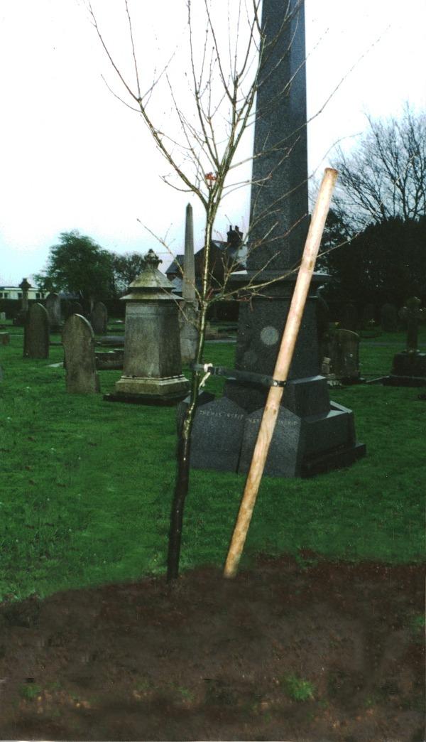 Fenstanton WI - oak sapling 20000